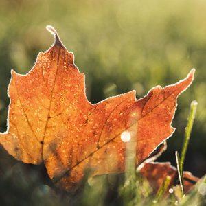 Przegląd jesienny – Najlepszy początek bezpiecznej drogi